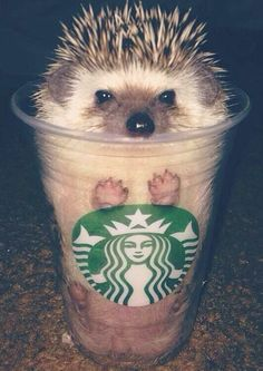Remember him when you take star bucks coffee today. http://ift.tt/2Afzkpv