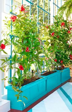 Rely on plants for privacy. This planter box and trellis give flowering vines room to take root and climb.