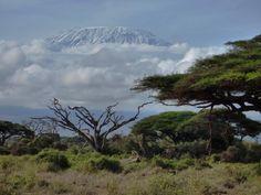 """Begleitete Gruppenreise Kenia - """"Wilde Tiere - Weites Land"""" 2015"""
