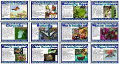 Beautiful Butterflies printable poster set.  Includes: What is a butterfly? Species of butterflies, 4 pages showing the stages in the life cycle of a butterfly What do butterflies eat?  What eats butterflies? Don't eat me! - using markings and mimicary to avoid being eaten, camouflage, and eye markings, The Biggest Butterfly - Queen Alexandra's Birdwing.