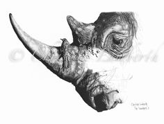 The rhino is a much hunted animal and in real danger of becoming extinct. This drawing is titled The Vanishers I and raises awareness of this plight. Limited Edition Archival Prints are available. Click on the image for more details and BUY yours now.