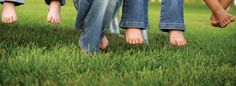 Lawn Care: How to Maintain a Lush, Green & Healthy Lawn
