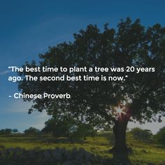 """""""The best time to plant a tree was 20 years ago. The second best time is now.""""   – Chinese Proverb"""