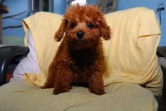 Brooklyn assisting in Adoptions. http://www.petfinder.com/petdetail/23370463#