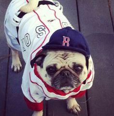 Big Puggy. Go Red Sox.