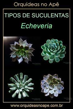 Echeveria, Succulent Pots, Succulents, Cactus Y Suculentas, What Inspires You, Wonderful Things, Botany, Backyard, Floral