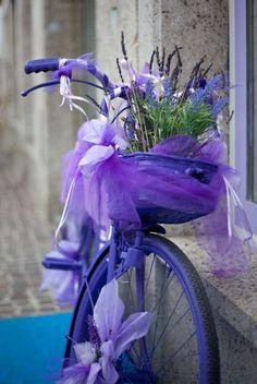 danaaallen:    Lilac Bike