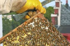 City buzz: Ted Goins is an urban beekeeper on his downtown rooftop