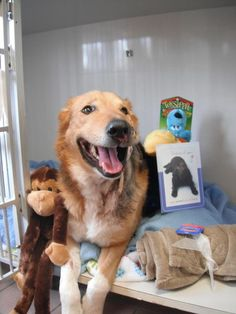 SUDBURY ONTARIO!! After all the 100% vetinary care - love and hope for a future with the couple that found Buddy by the roadside - with bullet wounds to his face - Buddy sadly never made it - Love you Buddy RIP