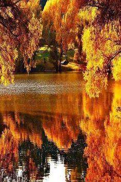 Reflected beauty                                                       …