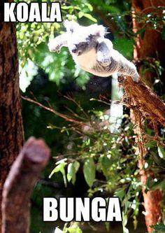 koala memes - Buscar con Google