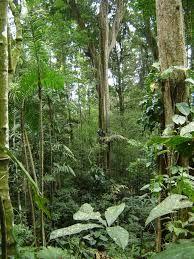 florestas tropicais - Pesquisa Google
