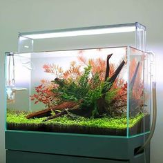 Simple and beautiful planted aquarium by TWINSTAR