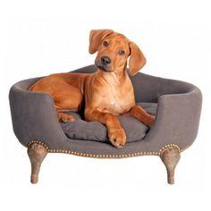 panier chien #dog #cute                                                                                                                                                                                 Plus