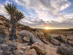The sun rises over Joshua Tree Natio designated Castle Mountains, Mojave Trails and Sand to Snow national monuments will connect Joshua Tree to other federally protected lands in a massive 1.8-million-acre preservation bid (Sierralara/RooM the Agency/Corbis).