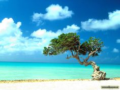 Aruba! Honeymoon.