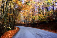 Famous and beautiful road on the to Ağva passed Şile. 1Hour long drive away from the center of the city.
