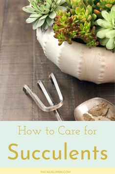 Learn What You Need In Order To Keep Your Succulents Healthy, Thriving And Beautiful. This Straightforward Guide Will Help You Care For Both Indoor And Outdoor Succulents Propagating Succulents, Growing Succulents, Succulents Diy, Planting Flowers, Outdoor Plants, Outdoor Gardens, Low Maintenance Indoor Plants, Cactus Care, All About Plants