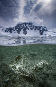 Underwater Demise by Paul Zizka on 500px