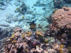Cemetery Beach, Grand Cayman Island