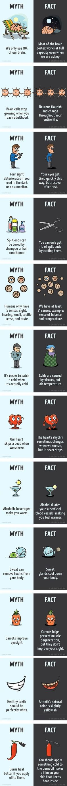 Science myths and facts about the human body with illustrations. But some or too simplified or there is truth in the mythe (vitamine D from Carrots to create rhodopsine) Simple Life Hacks, Useful Life Hacks, The More You Know, Did You Know, Books And Tea, 1000 Lifehacks, Science Facts, Science Quotes, Physics Facts