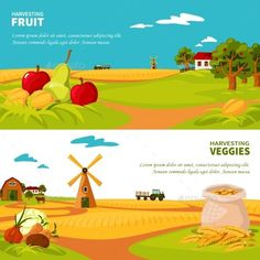 Farm Banners by macrovector Flat design horizontal banners set with beautiful farm landscapes veggies and fruit harvest isolated vector illustration. Editable