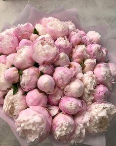 """Flowers 🌺 on Twitter: """"… """" Luxury Flowers, My Flower, Beautiful Flowers, Flower Aesthetic, Pink Peonies, Purple Roses, Vintage Pink, Vintage Teacups, Planting Flowers"""