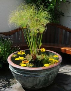 Image result for small water gardens in containers Water gardens