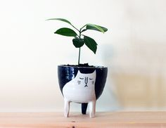 The Full Collection : Black Cat Planter