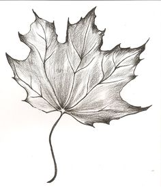 Supreme Portrait Drawing with Charcoal Ideas. Prodigious Portrait Drawing with Charcoal Ideas. Fall Drawings, Pencil Drawings Of Flowers, Flower Sketches, Art Drawings Sketches Simple, Pencil Art Drawings, Maple Leaf Drawing, Tattoos Motive, Leaves Sketch, Art Du Croquis