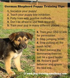 Best 10 German Shepherd Puppy Training Tips