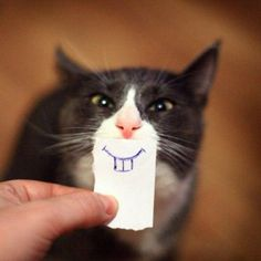Cats and kittens are the funniest animals on Earth. They always make us laugh! Just look how all these cats & kittens play, fail, get along with dogs, make f. I Love Cats, Crazy Cats, Cute Cats, Funny Cats, Funny Animals, Cute Animals, Funny Cat Faces, Cat Fun, Silly Cats