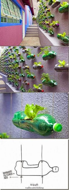 DIY-hanging garden from old soda bottles