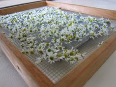 DIY DRYING RACKS – HOW TO BUILD A DRYING RACK FOR FOOD PRESERVATION by Amy Pennington