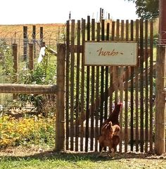 Tobacco stick gate...looks like that chicken is really wanting in (1) From: Country Wisher, please visit
