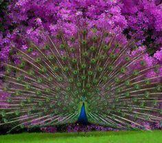 Amazing!!