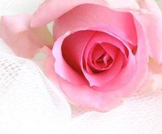 Mαιѕσи ∂єѕ fℓєυяѕ by SamanthaSerena on We Heart It
