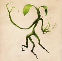 The Bowtruckle is immensely difficult to spot, being a hand-sized, insect eating, tree dweller. Theme Harry Potter, Lego Harry Potter, Harry Potter World, Magical Creatures, Fantasy Creatures, Famous Vampires, Beast Creature, Monster Book Of Monsters, Hogwarts Mystery