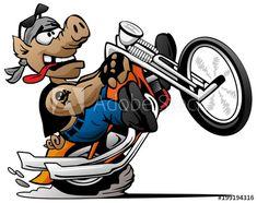 Biker hog popping a wheelie on a motorcycle cartoon vector illustration