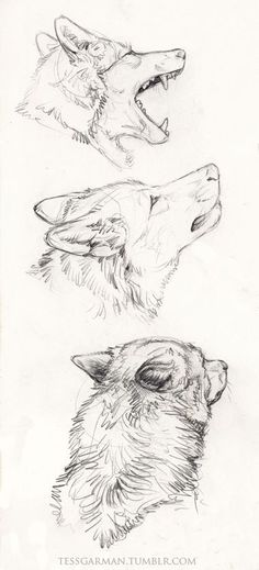 Wolf Drawing                                                       …                                                                                                                                                                                 Mais