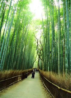 Bamboo in Japan by LiisaFig.deviantart.com on @DeviantArt