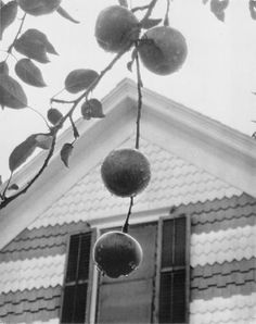 Stieglitz, Apples and Gable 1922 Alfred Stieglitz