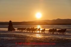 Richie Diehl on the Unalakleet River on the way into Unalakleet at sunrise on Sunday, March 9, during the Iditarod Sled Dog Race 2014.PHOTO (c) BY JEFF SCHULTZ/IditarodPhotos.com -- REPRODUCTION PROHIBITED WITHOUT PERMISSION: Richie Diehl on the Unalakleet River on the way into Unalakleet at sunrise on Sunday, March 9, during the Iditarod Sled Dog Race 2014.PHOTO (c) BY JEFF SCHULTZ/IditarodPhotos.com -- REPRODUCTION PROHIBITED WITHOUT PERMISSION