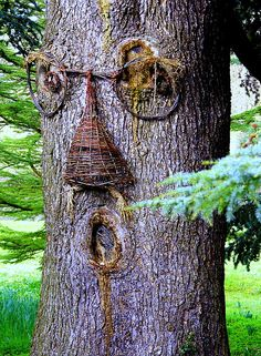 need to try this on my trees around the fire pit