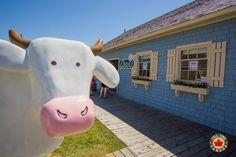 Cows Ice Cream at Peakes Wharf Prince Edward Island, Canada Day, Tourist Spots, Small Island, Cows, Ice Cream, No Churn Ice Cream, Icecream Craft, Ice