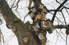 vacant birdhouses