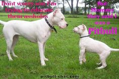 """#Dogo Argentino - """" Don't worry son, I'm trying to educate them assholes... But Mommy, they said I was a pitbull """""""
