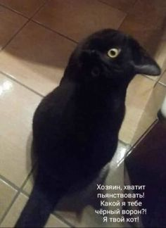 New Funny Pictures Of Animals Lol Life 52 Ideas Funny Animal Pictures, Funny Photos, Funny Animals, Funny Owls, New Funny Jokes, Funny School Jokes, Funny Stories To Tell, Hello Memes, Blonde Jokes