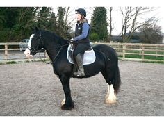 15hh 13-year-old black cob mare for sale | HorseDeals.co.uk