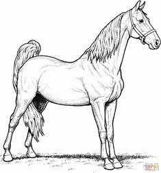 die 27 besten bilder von pferde ausmalbilder | ausmalbilder, ausmalen und malvorlagen pferde